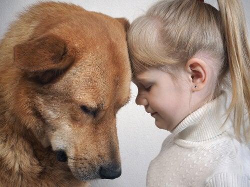 Ymmärtääkö koira ihmisen ilmeitä?