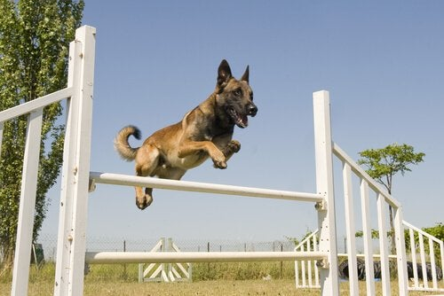 4 urheilulajia koirille