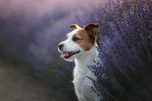 Kolme lääkekasvia lemmikin terveyden tukemiseen