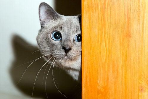 Kuinka ansaitset kissan luottamuksen?
