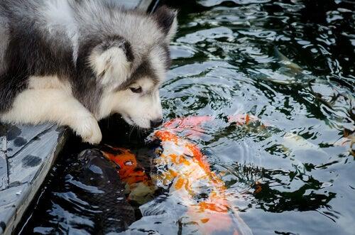 Eläinlajien välinen ystävyys