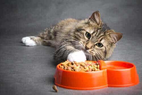 Syöpää sairastavan kissan ruokinta