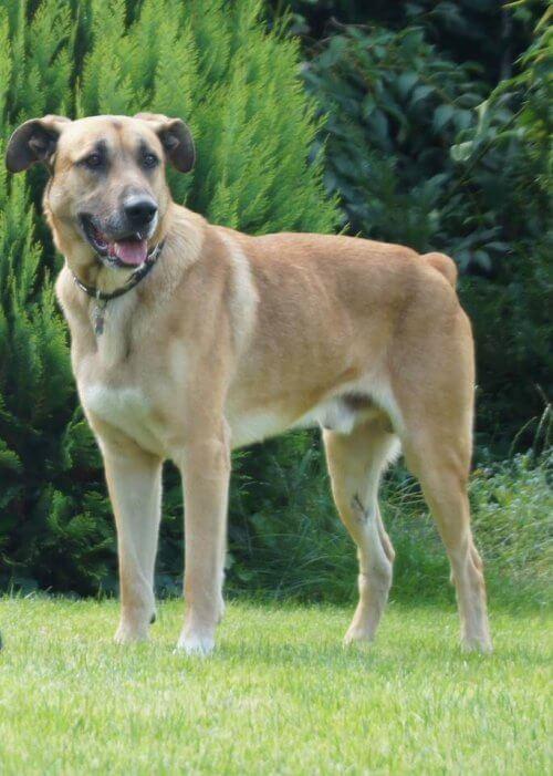 Saksalainen lentoemäntä adoptoi hylätyn koiran Argentiinassa