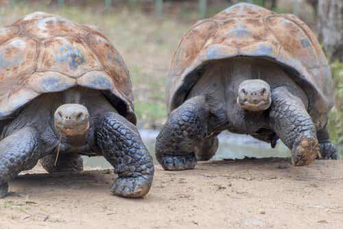 Galápagossaarten eläimet