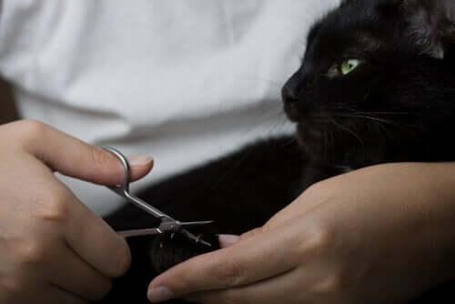 Kissan kynsien leikkaaminen