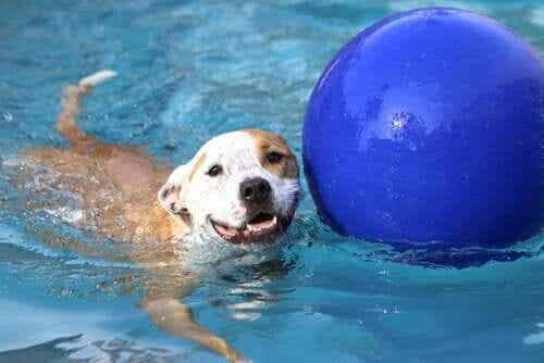 Uima-allas koirataloudessa