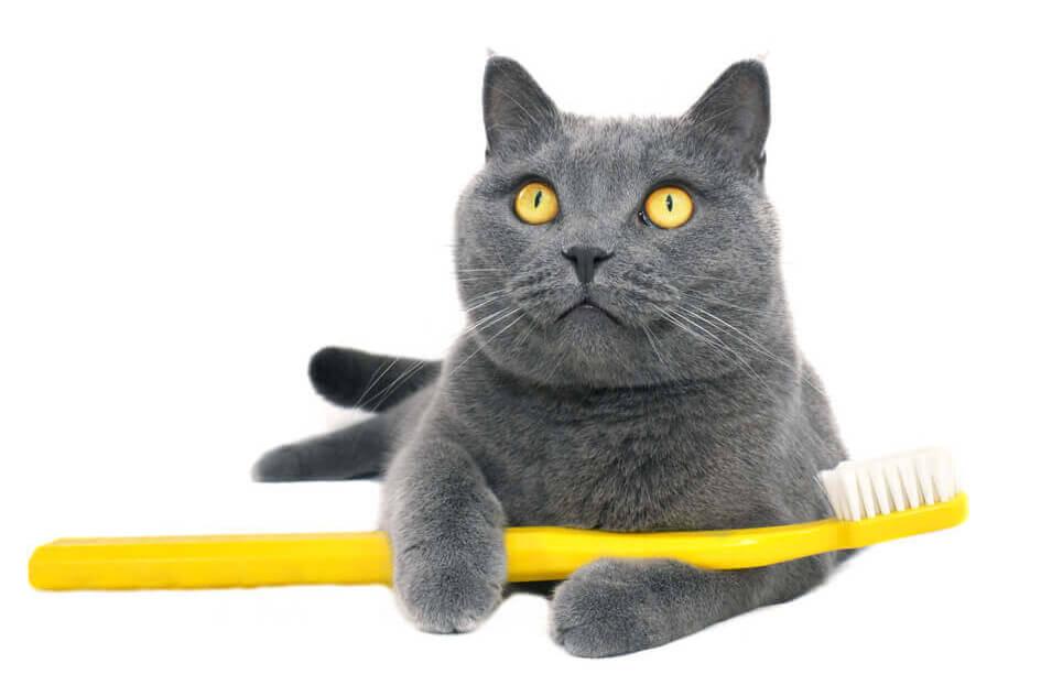 Kissan hampaista huolehtiminen