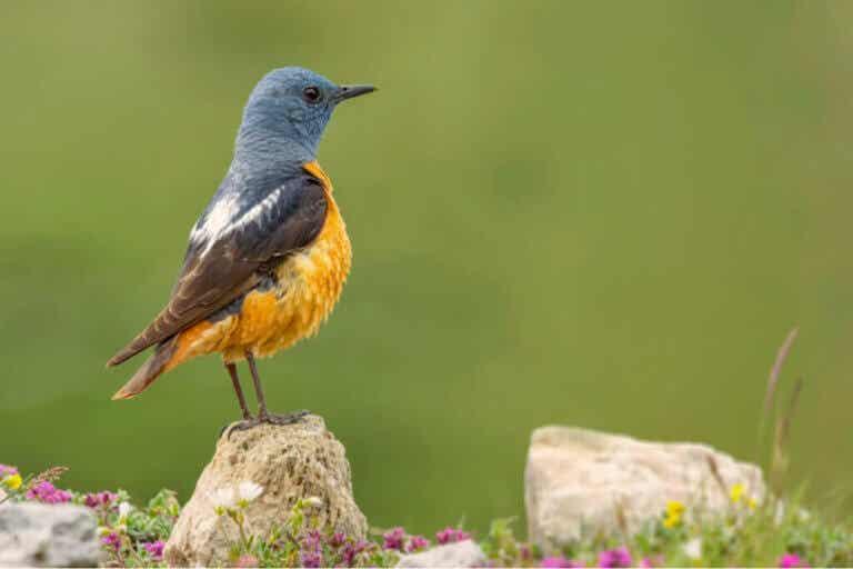 Sierra de Guadarraman kansallispuiston eläimistö
