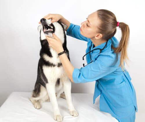 10 yleistä koirien sairautta