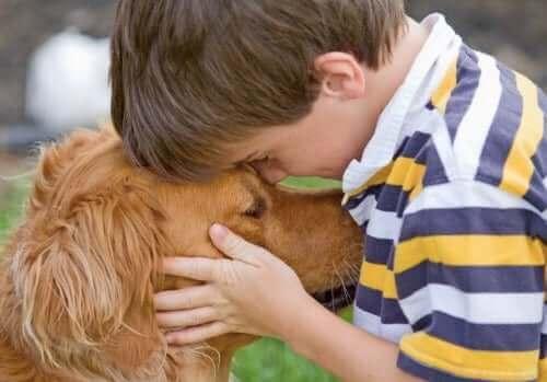 Lapsiperheisiin pienet koirarodut