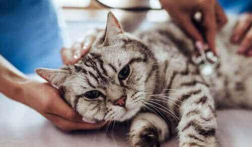 Kissojen tarttuvat taudit