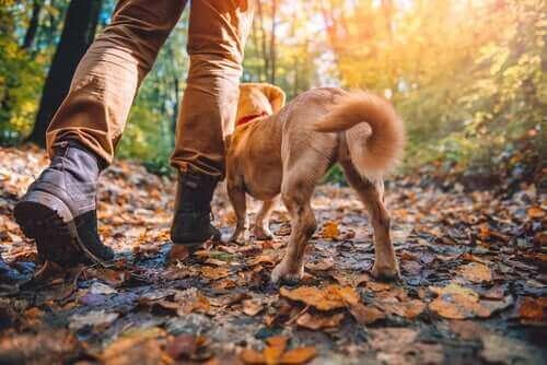 Parhaat koirarodut vaeltamiseen