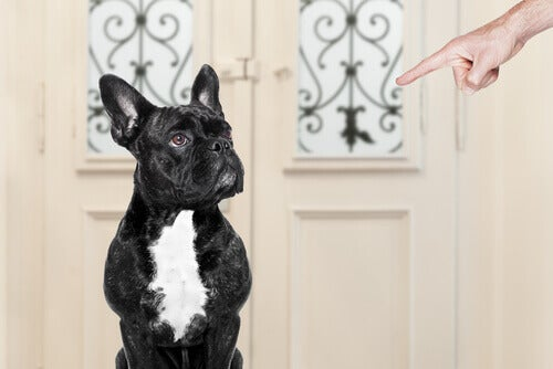 Kuinka saada itselleen hyvin käyttäytyvä koira?