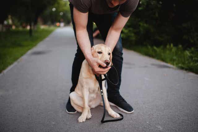 Nämä 6 asiaa voivat aiheuttaa koiralle tukehtumisvaaran