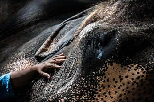 5 bakteerien norsuille aiheuttamaa tautia