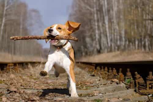 Koira kannattaa palkita ulkoilun jälkeen
