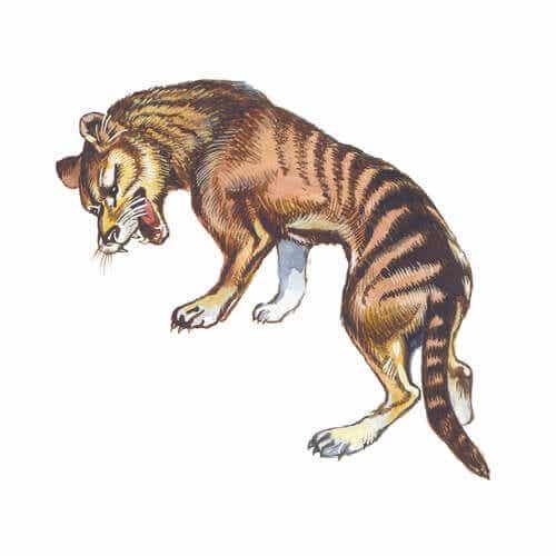 Millainen eläin oli sukupuuttoon kuollut tasmaniantiikeri?