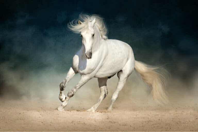 Hevosen koliikki