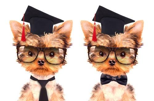 3 secrets pour éduquer un chiot