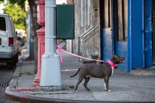 Pourquoi ne faut-il jamais laisser son chien attaché devant un magasin