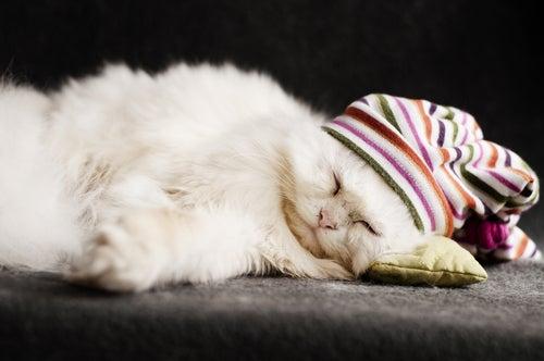 Chaton persan blanc qui dort avec un bonnet bariolé sur la tête