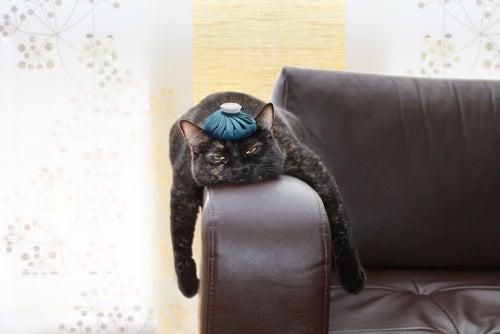 Découvrez les causes du stress chez les chats