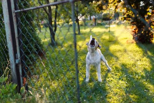 Nos animaux et le bruit – Comment leur venir en aide ?