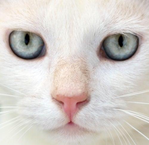 Les mythes sur les chats et la réalité
