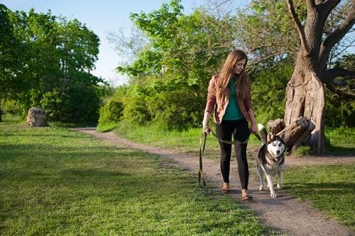 les chiens qui vomissent ne doivent pas manger de l'herbe dans les parcs