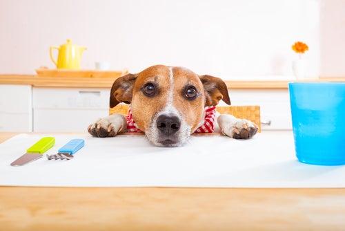 Un chien pose sa tête sur une table