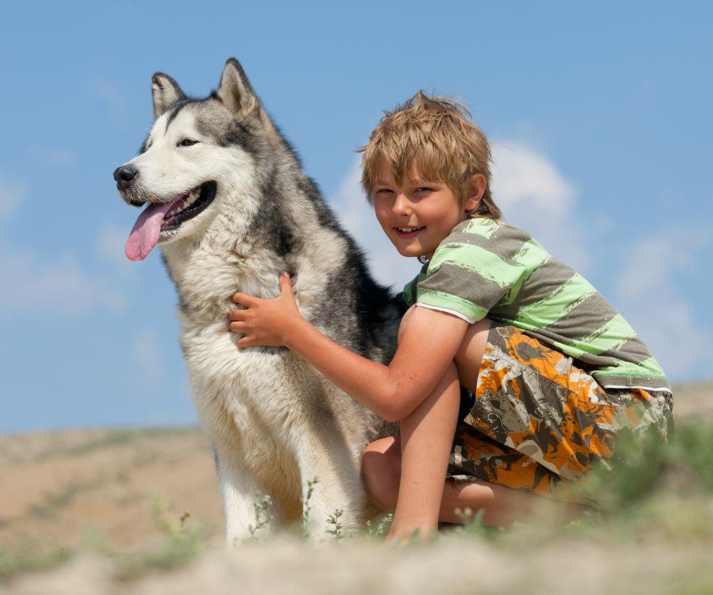 Un petit garçon et un chien husky