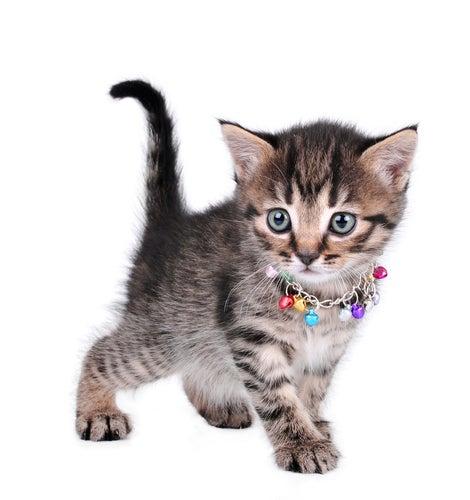 Pourquoi accrocher une cloche à son chat n'est pas recommandé