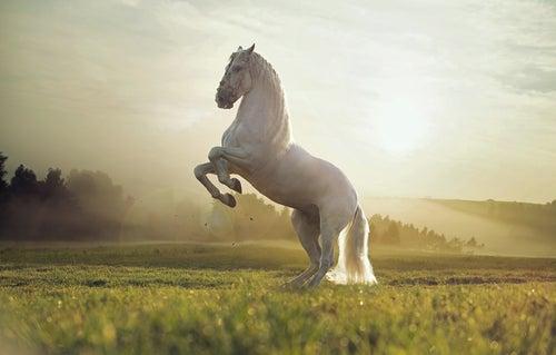 Un cheval andalou se cabre dans un pré