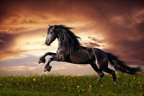 Savez-vous d'où viennent les chevaux ?