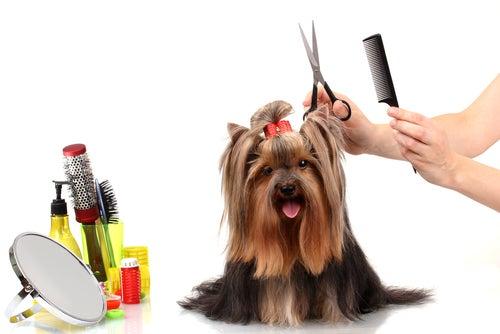 Trucs et astuces pour peigner votre chien