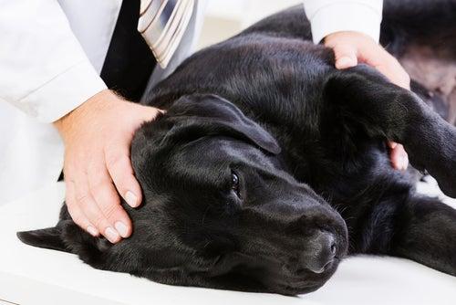 10 conseils pour que votre chien ne vous transmette pas de maladie