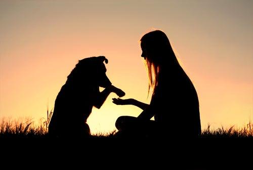 Ce que vous ignorez à propos de votre chien
