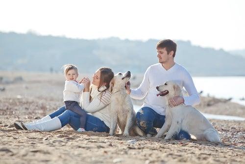 une famille et ses deux labradors sur la plage