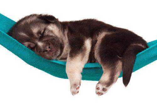 Le sommeil des chiens : de quoi rêve votre chien ?
