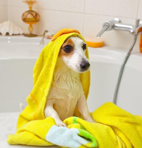 un chien sorti du bain