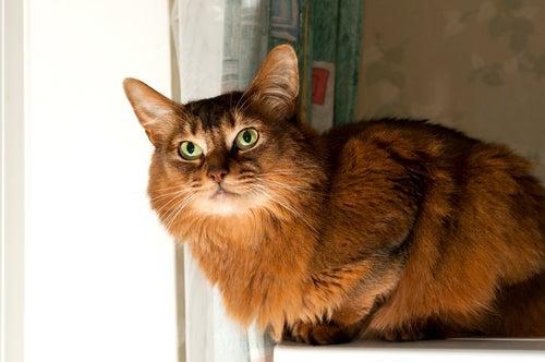 un chat assis