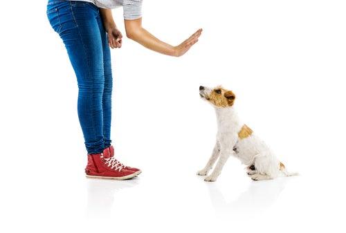 une femme indique non de la main à son chien