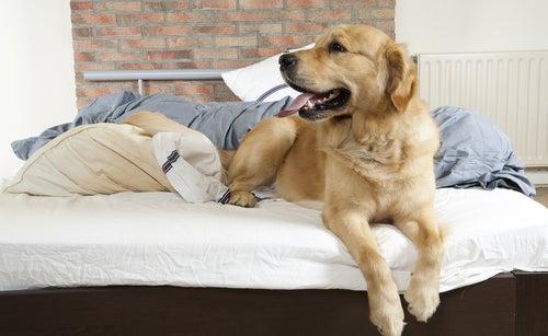 Un chien est installé confortablement sur un lit