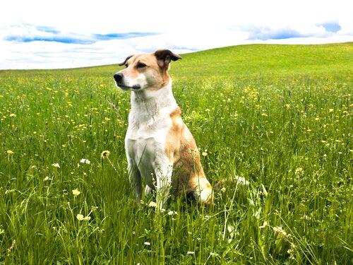 Les 6 bases de la psychologie canine: comprenez votre chien et contrôlez ses mauvaises habitudes
