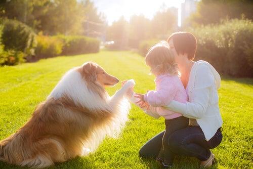 Une femme et un enfant jouent avec un Shetland