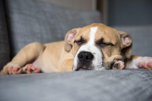 La régurgitation chez les chiens et les chats