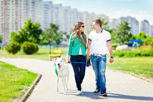La santé cardiovasculaire et les avantages d'avoir un chien