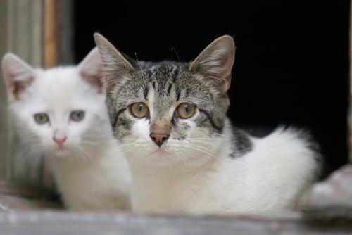 Deux chats errants