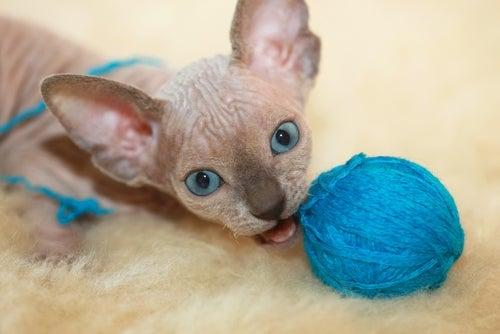 un chaton nu joue avec un pelote de laine