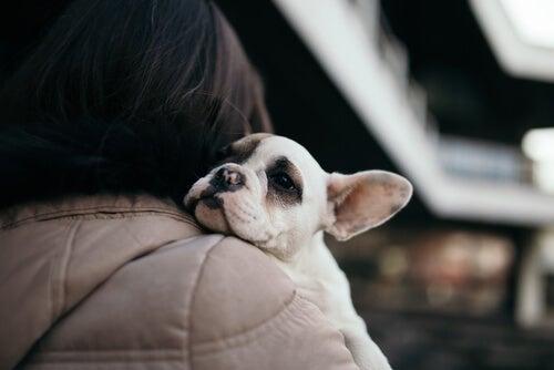 Un chiot repose sa tête sur l'épaule d'une femme